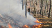 The Smoke Hole Wildfire has been burning in the Monongahela National Forest in Pendleton County for more than a week.