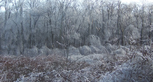 An ice storm like this one in Mercer County last December could happen over a much wider area Sunday night into Monday.
