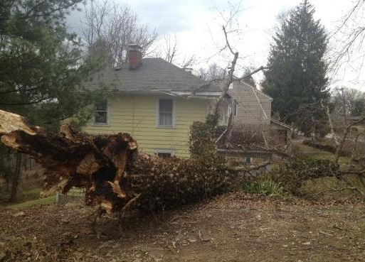 Wind gusts measured at 52 mph knocked down trees in Charleston Wednesday afternoon.