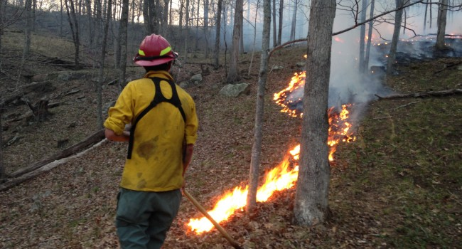 This brush fire burned several acres along Raccoon Creek in Cabell County. After layoffs, state foresters will be spread thin this fire season.