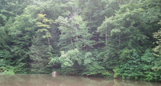 The mining company has agreed to clean out this pond at Kanawha State Forest as part of an agreement connecting with expansion of surface mine.