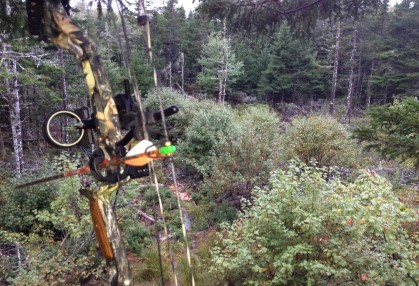 A view from a tree stand which West Virginia bow hunters crave as the temperatures cool.