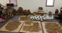 Confiscated ginseng potentially worth $180,000 on the world market.