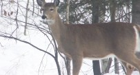DNR suggest scaling back doe harvest for 2015, but will hunters think it's enough