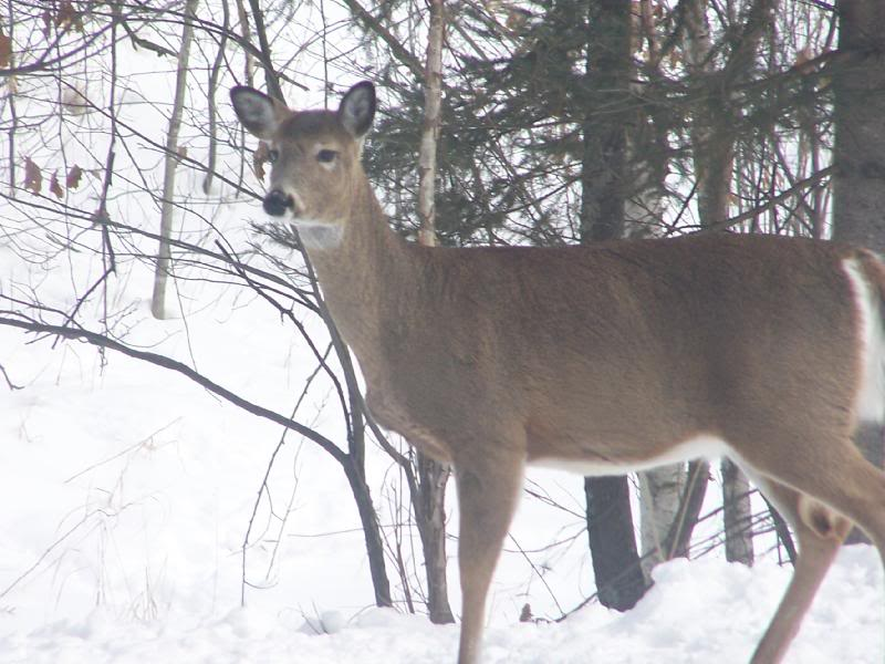 Wv metronews antlerless hunting proposals reflect lower for Md fishing license cost