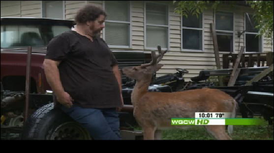 The six-pointer, released by DNR police at Ronnie Chapman's home July 4 was still around Tuesday evening.