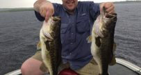 Two big largemouth after a morning of fishing with shiners along a grass line at Lake Toho in Florida
