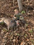 Chase Williamson sends along this picture of his 8 year old son Cruz Williamson with his first buck, a six pointer killed in Mingo County with his bow in 2020.