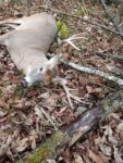 Marcus Boyce of Nettie, W.Va. finally killed this buck after trying to get him the last four years while hunting an area of Greenbrier County, W.Va.