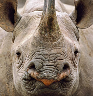 WWF rhino story
