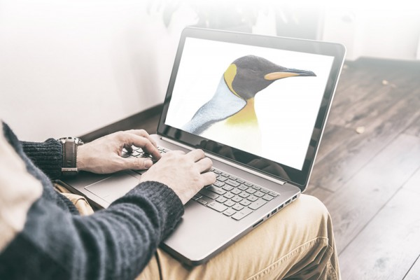 new-Penguin-update