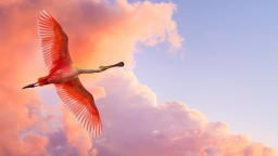 flamingo_flying_birds_sky_clouds_52960_1920x1080