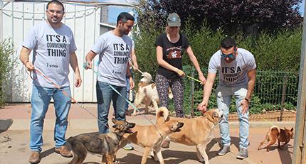 Rehovot Dog Shelter