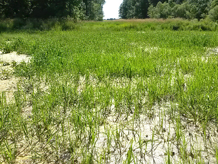 Consumer Energy Wetland