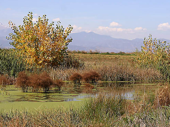 Colorado Wetland Bank