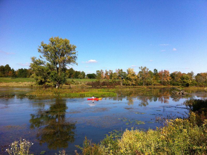 Beaver Island Restoration