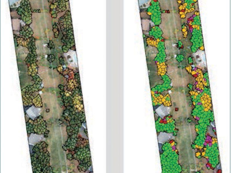 NY Hazard Tree Mapping