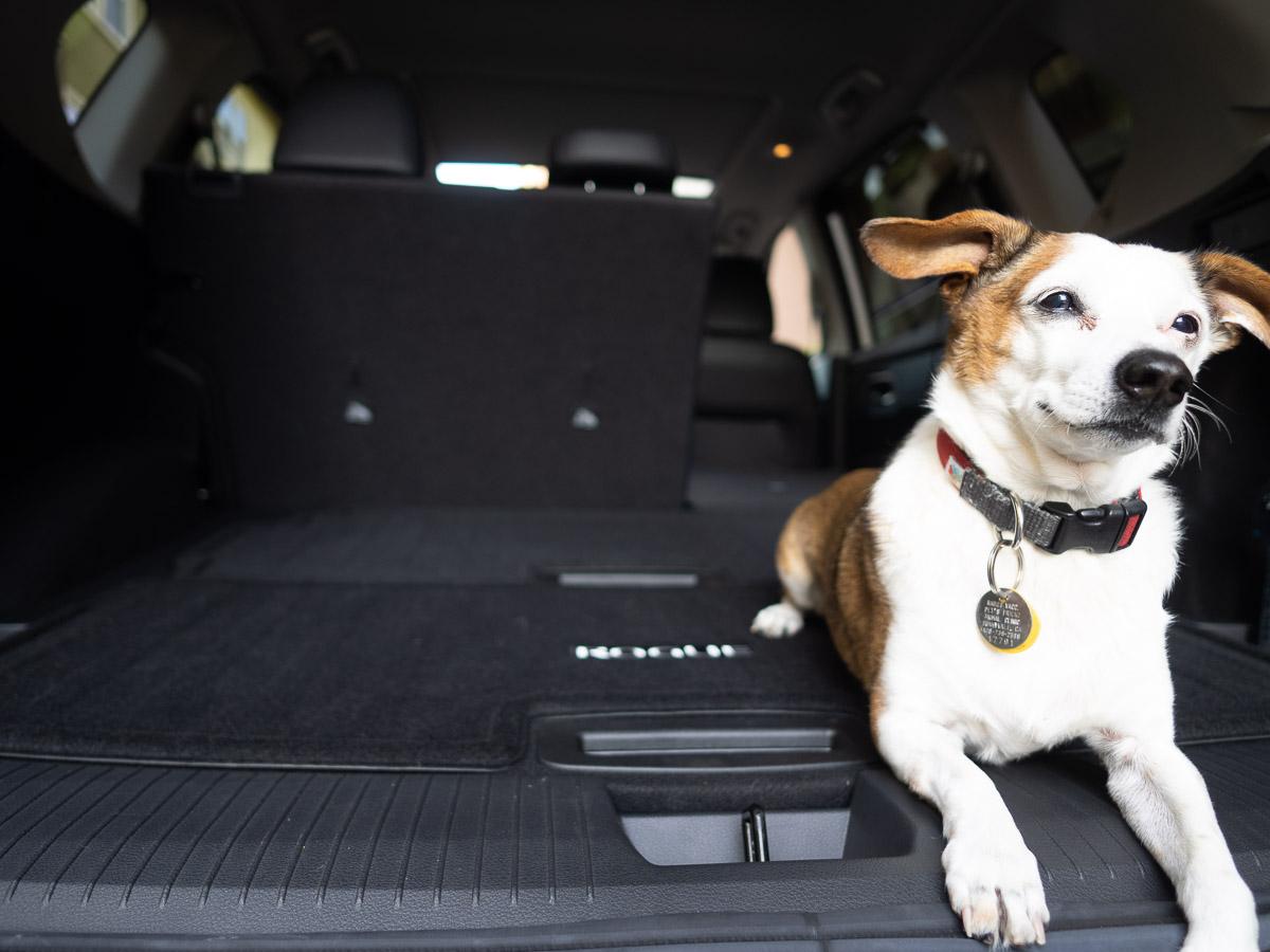 jack russell terrier inside 2021 Nissan Rogue