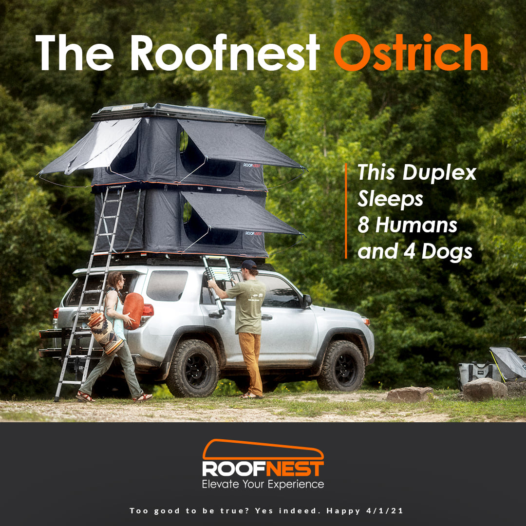 Roofnest Ostrich