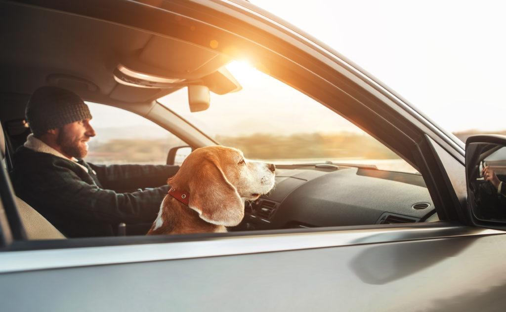 dog road trip essentials
