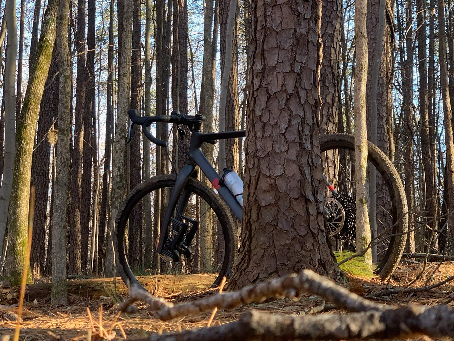 e13 xcx race carbon gravel wheels on a lauf true grit gravel bike next to a tree
