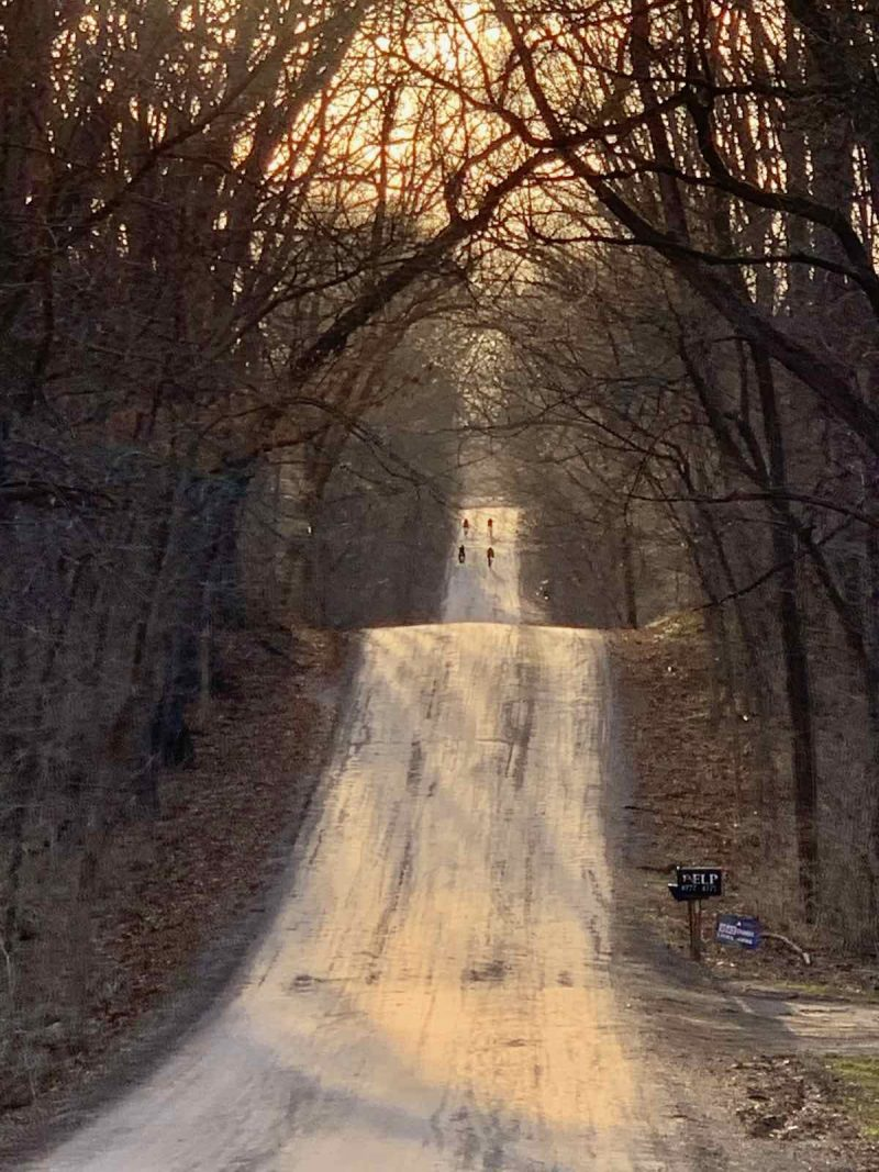 bikerumor pic of the day gravel bike riding in Ann Arbor, Michigan, a group of cyclists is in the distance over rolling gravel road with bare trees on either side and the setting sun peeking through.