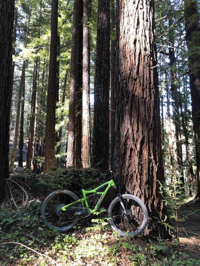 Bikerumor pic of the day a bright green mountain bike sits under a giant redwood tree in the santa cruz mountains of california