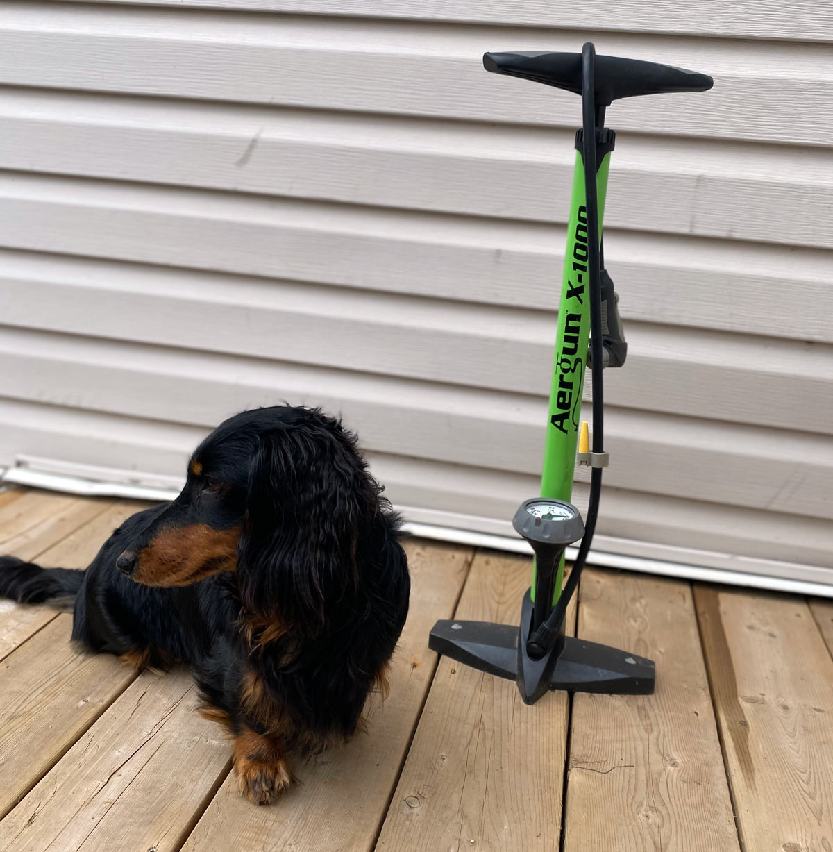 bicycle floor pump with a dog next to it