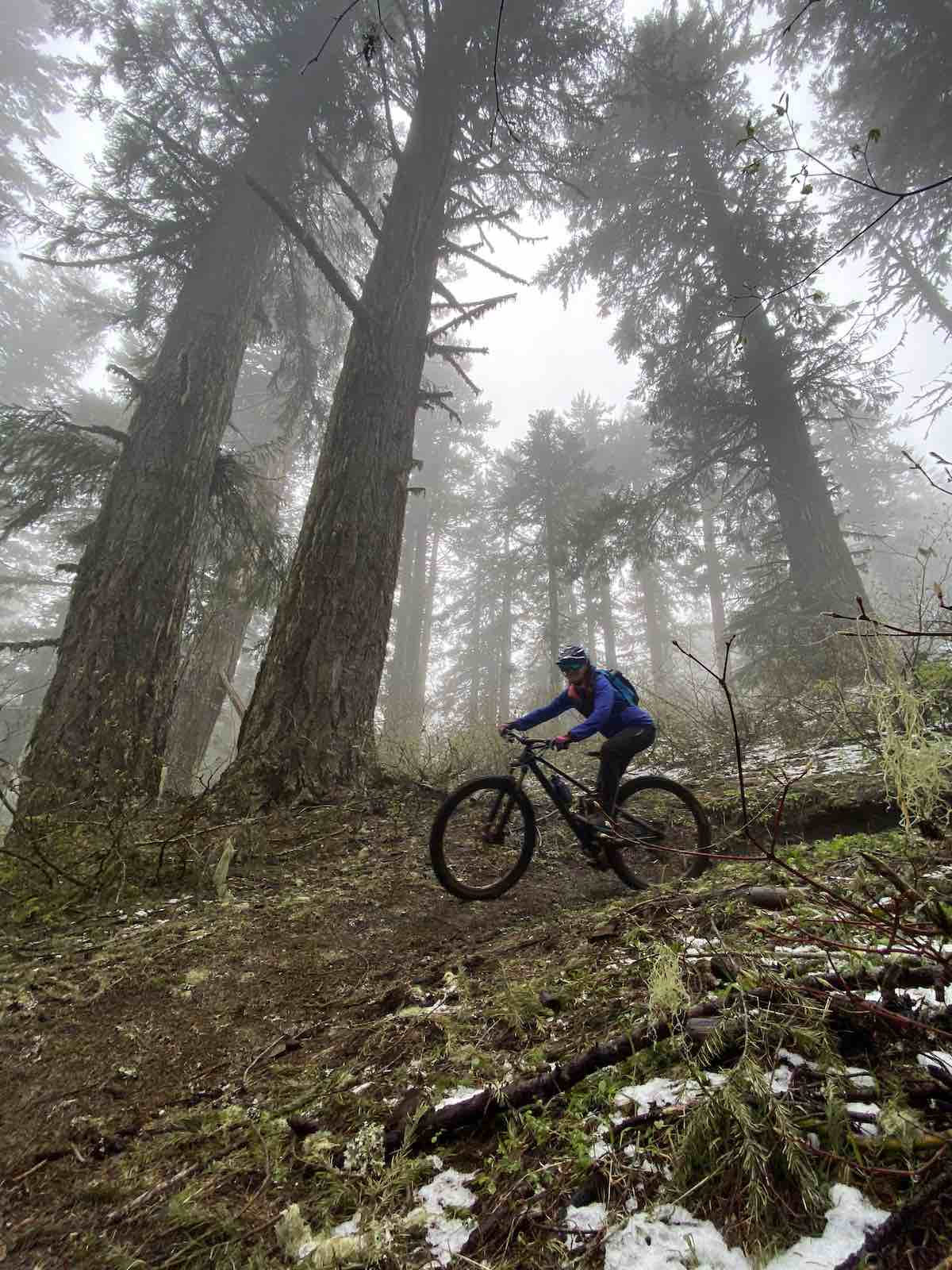 bikerumor pic of the day a cyclist ride through large cedar trees in a slight fog with patches of snow on the ground in oakridge oregon.