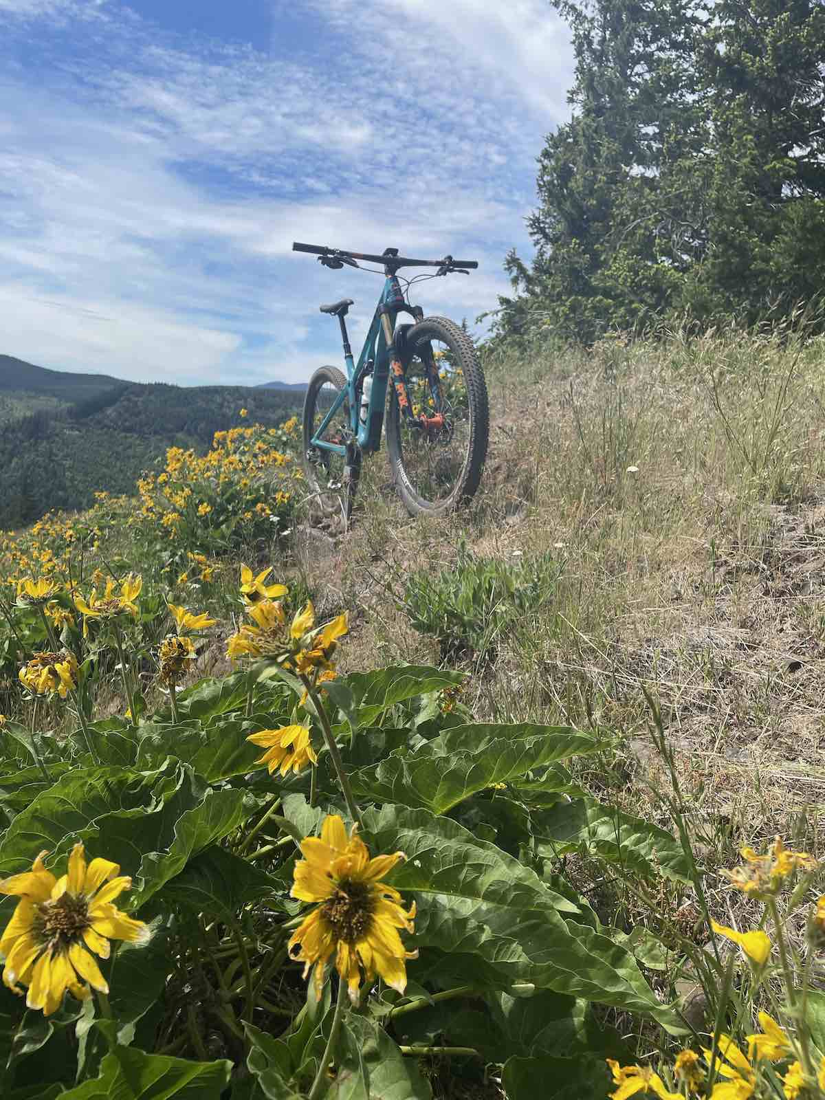 bikerumor pic of the day a mountain bike is on a trail that is covered in tall grass with sunflowers to one side the trail slopes so that you can see trees at the top and a mountain valley below, it is sunny and there are whips clouds in the sky.