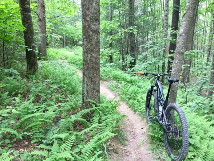 bikerumor pic of the day narrow back mountain bike dirt trail with ferns surrounding it among the trees with new leaves.