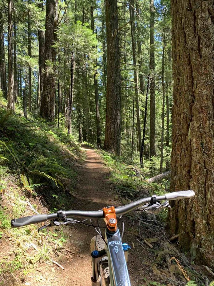 bikerumor pic of the day the handlebars of a mountain bike are at the bottom of the photo pointed along a dirt trail in a green wooded forest sun is peeking through the trees.