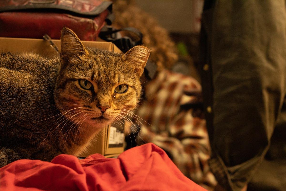 Junkyard Cats Tracklocross teaser