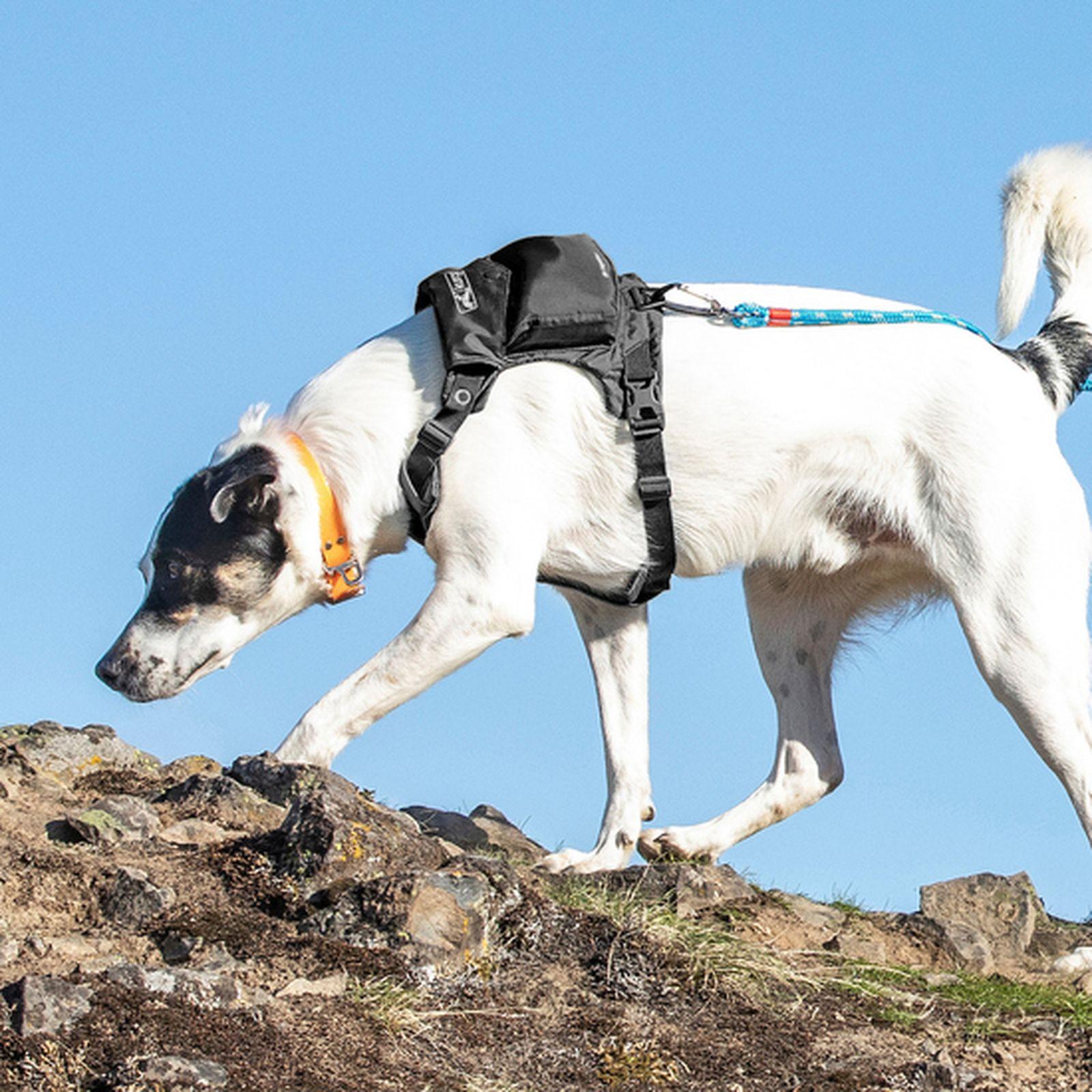 kurgo stash and dash best trail dog gear