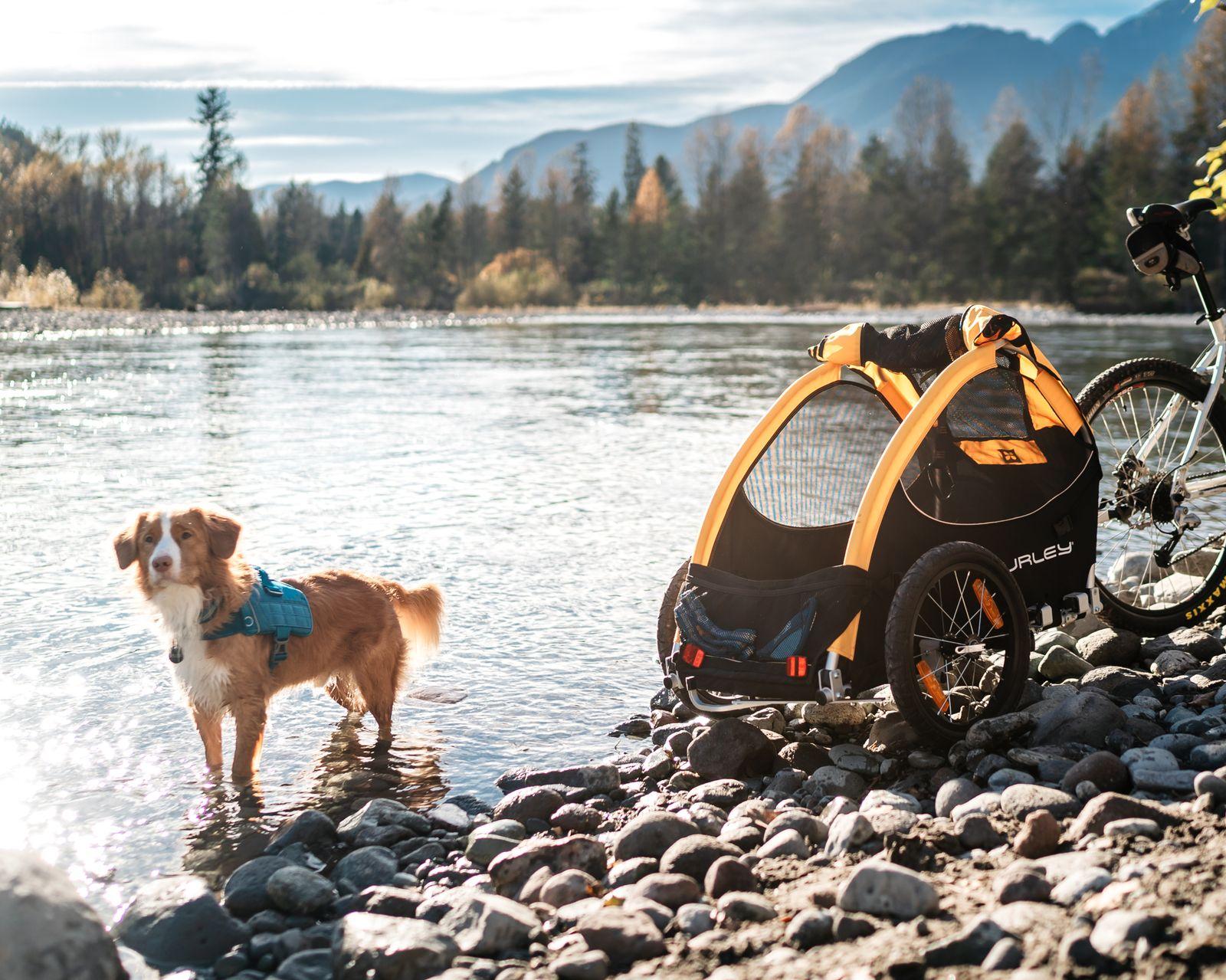 burley tail wagon best trail dog gear