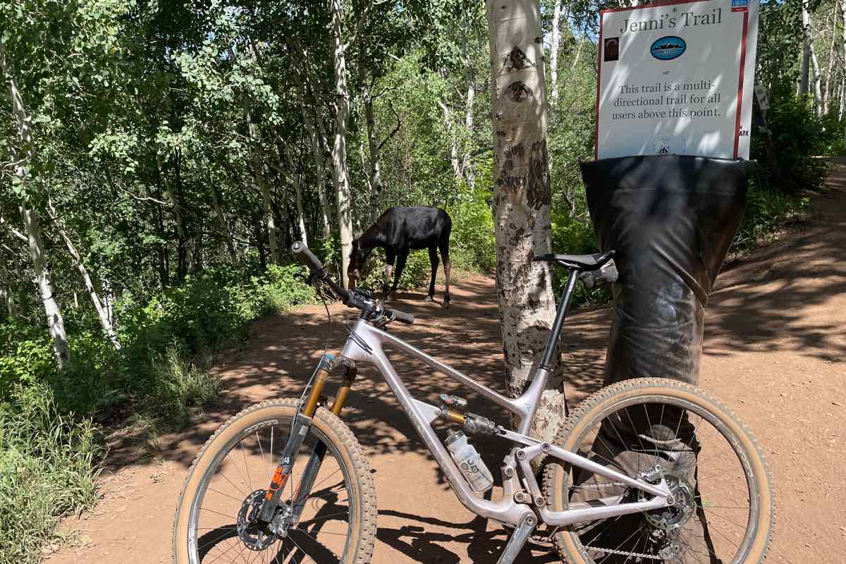 bikerumor pic of the day a mountain bike leans against a trail head with a moose in the distance blocking the trail, there are trees on either side of the trail creating shade from the direct sun.
