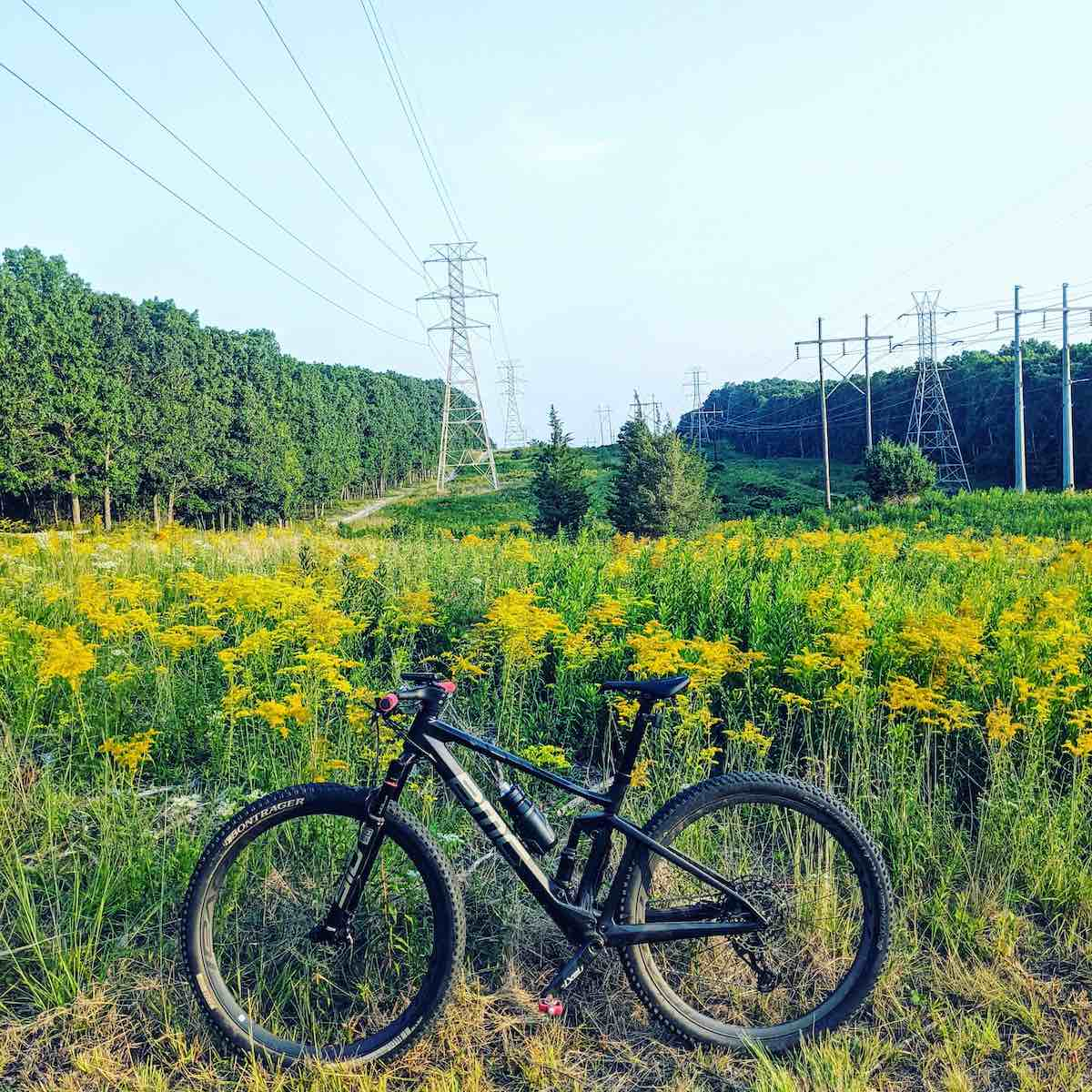 bikerumor pic of the day a bicycle is placed in front of a field of blooming golden rods underneath a power line with woods on either side. the sky is clear.