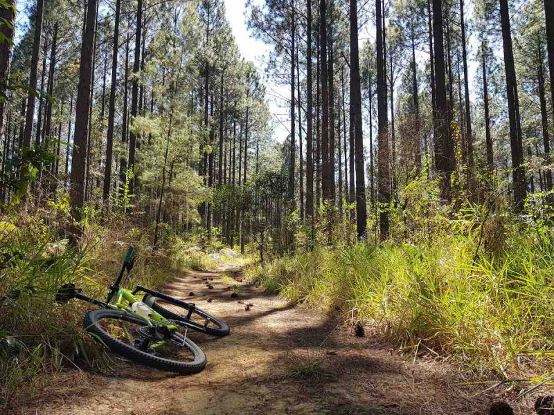 a mountain bike lays on its side on a pine straw covered trail, surrounded by pine trees, the sun shines through and the sky is bright.