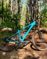bikerumor pic of the day bright blue mountain bike is won a pine straw covered hard packed dirt trail surrounded by tall trees, the sun is bright and shines through the leaves onto the trail.