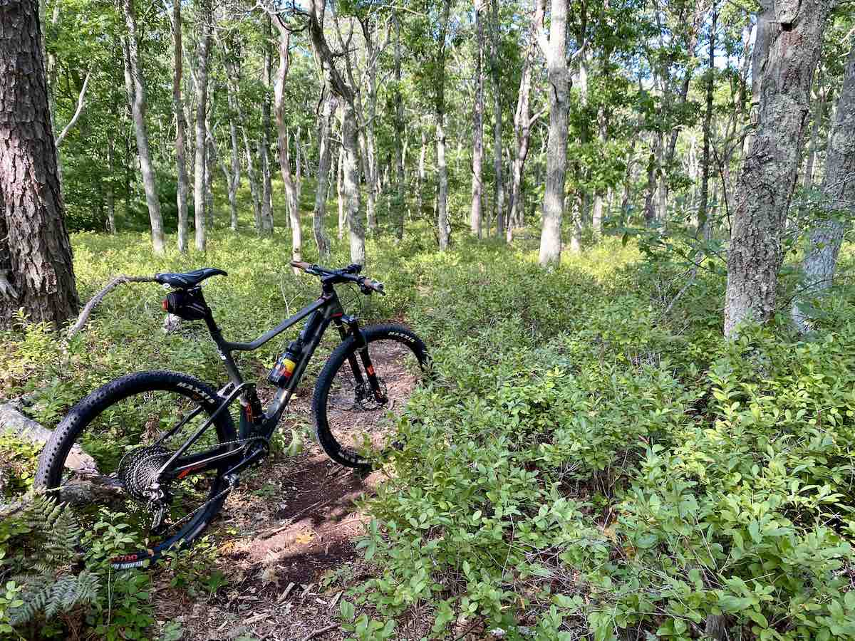 bikerumor pic of the day a mountain bike is on a dirt trail among a lush green shrub clearing with white trunked trees surrounding.