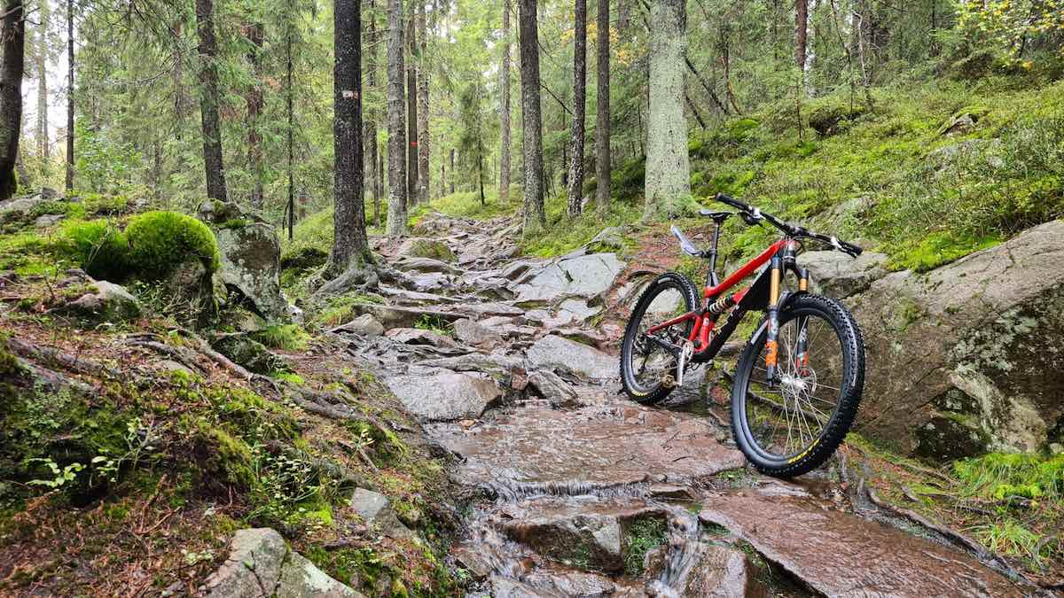 bikerumor pic of the day a red mountain bike leans against some rocks that make up a trail in the forest. There is moss on the ground around the trees and some of the rocks, the trees are tall and straight and there are lots of green leaves, everything is wet like it has just rained.