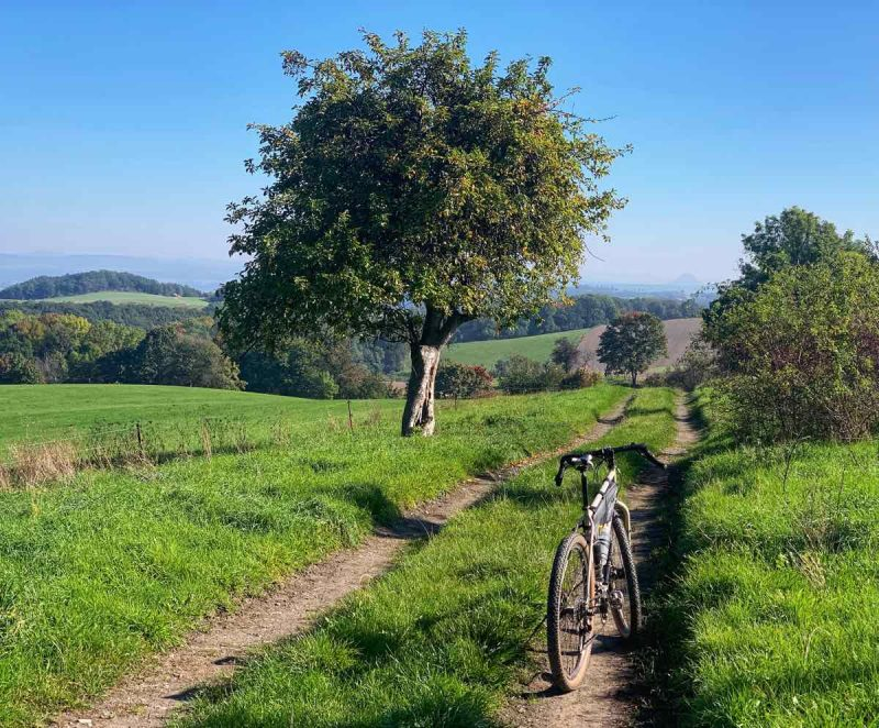 bikerumor pic of the day a bicycle is on one side of a narrow dirt car path through a bright green grassy field, there is one perfectly round shaped tree in the center of the image with rolling hills behind it and a clear blue sky above.
