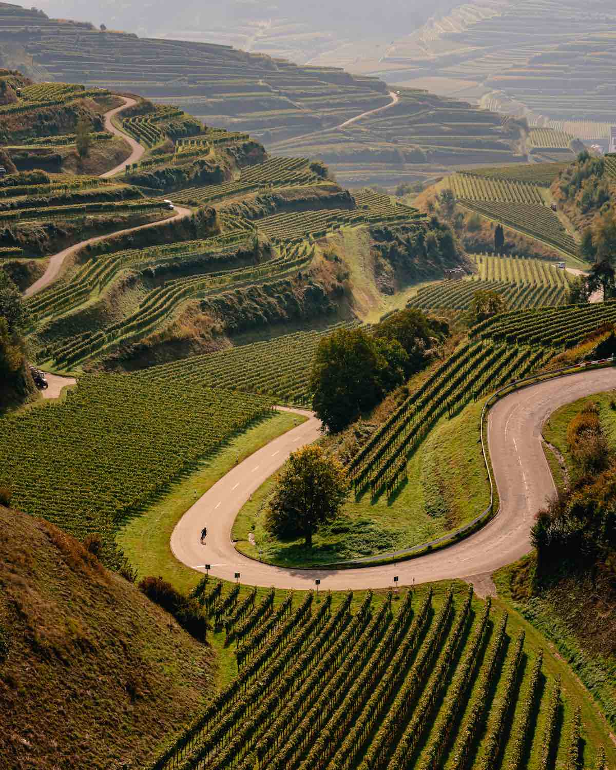 bikerumor pic of the day photo of a cyclist from far away in the middle of a curvy road surrounded by vineyards that grow up the sides of the mountain. The sky is hazy and the sun is bright.