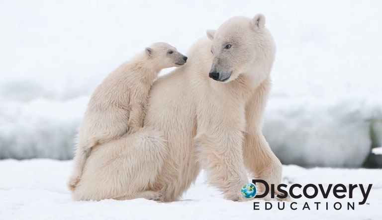 Classrooms Worldwide Invited to Join Discovery Education and Polar Bears International for an Exciting Virtual Field Trip to the Arctic Tundra