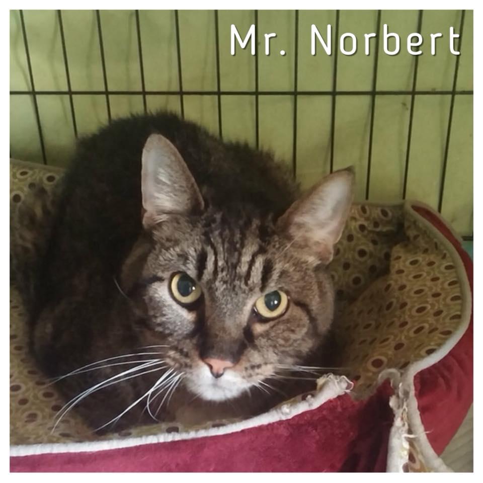 Mr. Norbert