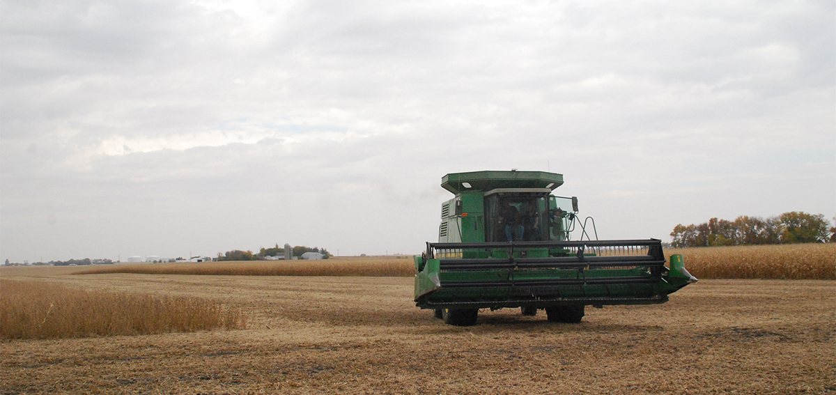Tractor combining soybeans in farm field