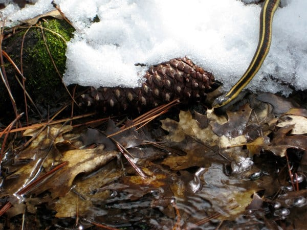 Yosemite winter snake