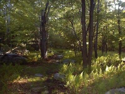 Laurel Highlands Trail