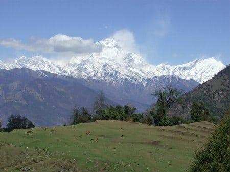 Tadapani-Dana Nepal