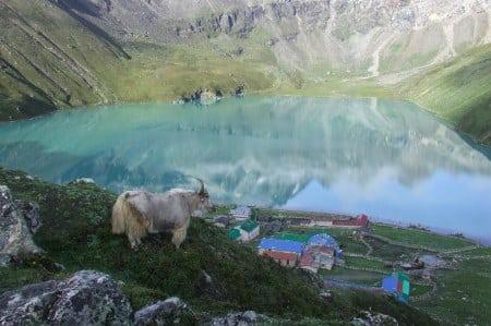 Goat Nepal glacial lake